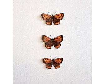 Hand-painted American Copper Butterfly Specimen