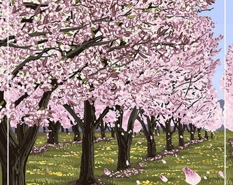 Michigan - Cherry Orchard in Blossom (Art Prints available in multiple sizes)
