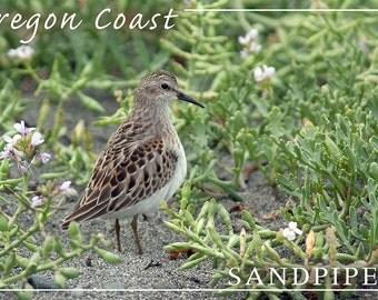 Oregon Coast - Sandpiper (Art Prints available in multiple sizes)