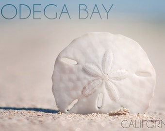Bodega Bay, California - Sand Dollar and Beach (Art Prints available in multiple sizes)