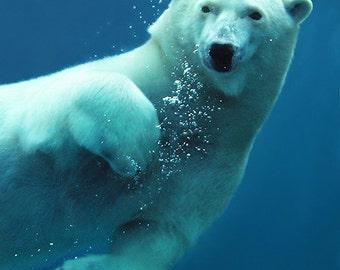 Polar Bear Swimming (Art Prints available in multiple sizes)
