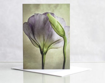 Photo greeting card. Floral greeting card. Flower greeting card.  Lisianthus and bud Photographic Greeting Card. Blank card.
