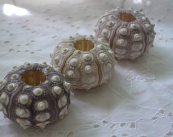 "Sputnick Sea Urchins ( 2- 2 1/2"") | 1 piece"