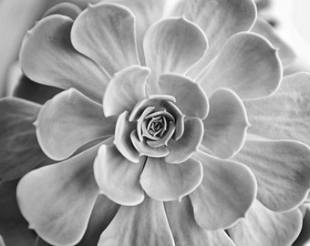 Black and White Texture Succulent Photography Botanical Fine Art