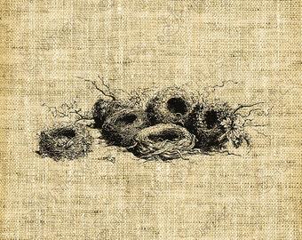 Vintage image//Bird's Nests in a row//Vintage Graphics//Nest//Digital design//INSANT DOWNLOAD
