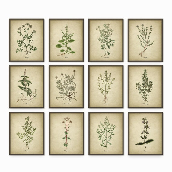 Kitchen herbs wall art print set of 12 vintage botanical for Kitchen wall prints