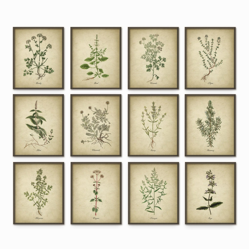 Kitchen herbs wall art print set of 12 vintage botanical for Art prints for kitchen wall