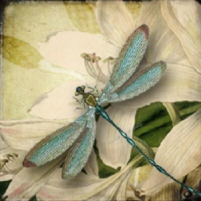 dragonfly1760