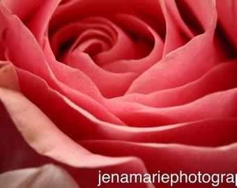 Macro Pink Rose Photo Print