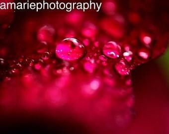 Macro Droplets on Rose Photo Print