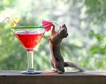 Birthday Gift, Humorous Art, Birthday Present, Squirrel Art, 21st Birthday, Funny Art, 30th Birthday, Art for Bar, Squirrel Photo,Wine Humor