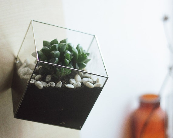 Wall mount geometric glass terrarium cube modern planter for Cubicle planter box