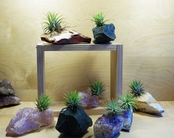 Crystal Air Plants - Very Cool Gift Idea