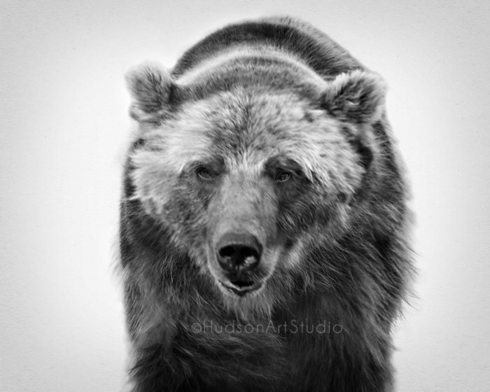 Grizzly Bear Art Print Black And White Fine Art Photography