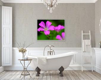 Purple Passion ~ Flower, Rhode Island, Summer, Flora, Floral Photography, Purple, Artwork, Photos, Joules, Summer Decor, Home Decor, Art