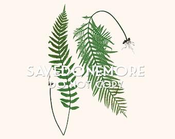 Vintage Botanical Fern Print Instant Download Make Your Own Art {Fern 2}