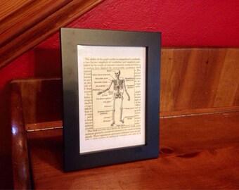 Framed Skeleton Print from 1950s Biology Book