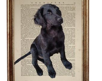 Flat Coated Retriever Dog, beautiful Art Print on Upcycled Dictionary Book page 8'' x 10'' inches