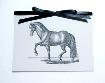 Horse Note Card | Horse Card | Horse Stationery | All Occasion | Blank Note Card | Happy Birthday | Unique Thank You | Best Wishes