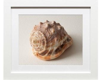 Instant Printable Seashell Photograph Beach Cottage Chic Décor Modern Minimalist Art Digital Download Wall Decor