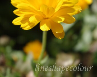 Yellow flower - Nature photography print