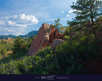 Colorado landscape photography – Natural red rock formation – Canvas wall art – Pine tree forest nature photography – Large gallery wall art