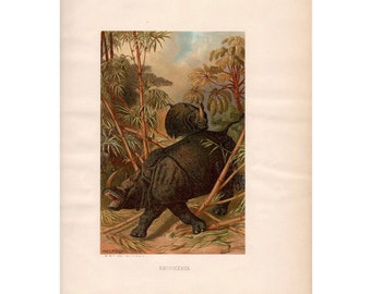 1885 RHINOCEROS PRINT original antique safari animal rhino lithograph