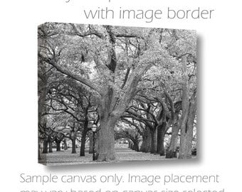 Park Photography-Spanish Moss-Live Oak Trees-Charleston Photograph-White Point Gardens-The Battery-B&W Fine Art Canvas-South Carolina