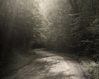 landscape photography, country road, road photography, rural, forest, woodland, Back Country Road, Appalachia