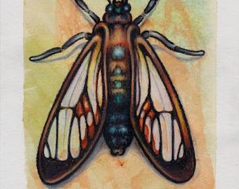 Moth Drawing -Original Orange Black Wasp Moth Study Illustration, colored pencil drawing, watercolor painting, 5 x 7, bug insect nature art