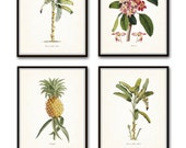 Vintage Tropical Botanical Print Set No. 1, Giclee Prints, Pineapple, Art, Beach Decor, Coastal Art, Botanical Print Set, Poster, Palm Trees
