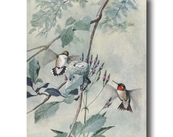 "Antique Hummingbird Art (Bird Illustration Print, Vintage Bird Wall Decor Gift) --- ""Ruby Throated Hummingbird"" No. 54"