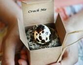 Crack Me! Bridesmaid Invitations in Quail Eggs - Maid of Honor Proposal - Unique Bridesmaid Proposal - Wedding - Bridal