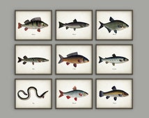 Fishing Art Prints Set Of 9 - Antique Bookplate Fish Illustrations - Angling Wall Art - Pike - Perch - Tench - Fisherman Gift Idea - AB371