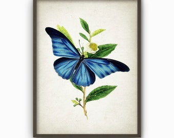 Antique Butterfly Illustration Wall Art Poster - Vintage Butterfly Book Plate Wall Art - Butterfly Picture Home Decor (AB258)