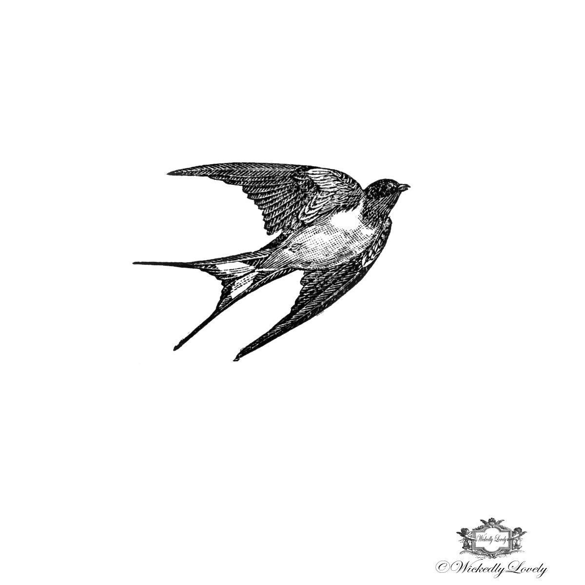 Tattoo Art Black And White: Black And White Vintage Swallow Swallow Tattoo Bird Tattoo