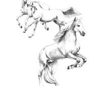 "Illustration ""Lipizzaner4"", artwork of pencil drawnings, horses"