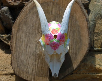 Real goat skull floral painted