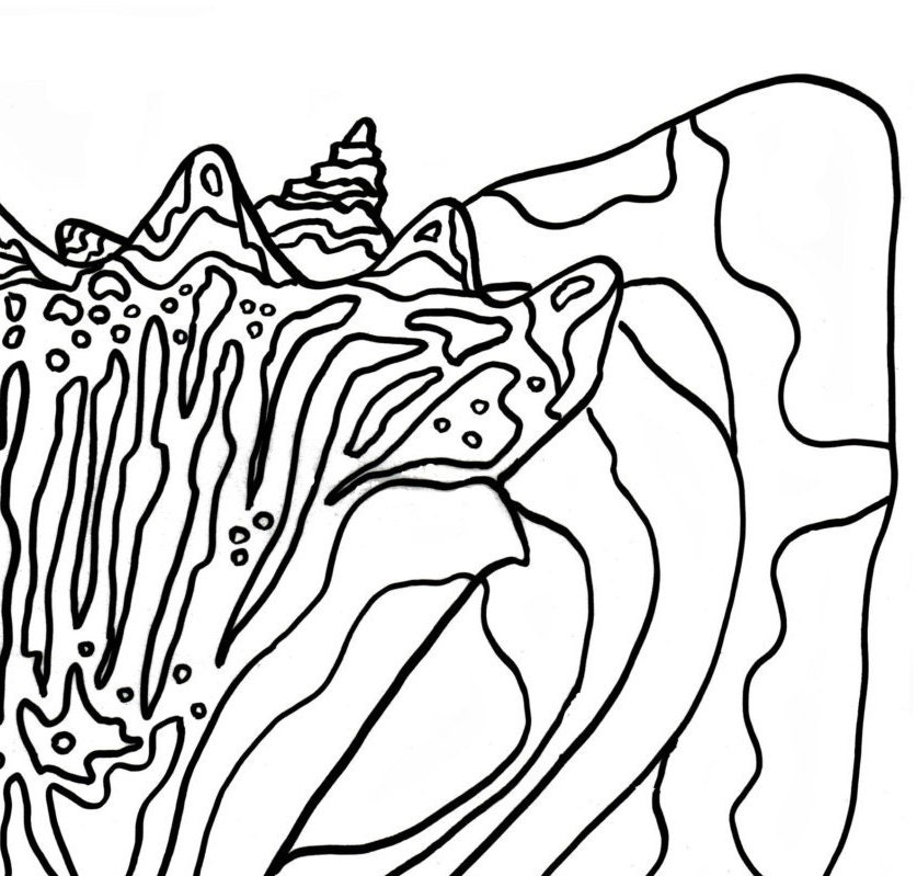 conch shell coloring pages - photo#6
