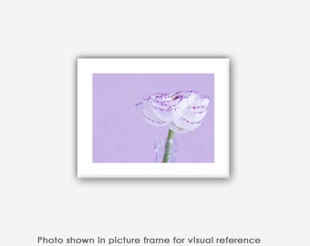 Flower Photography, Ranunculus, Prints, Photographs, Cards, Purple, Contemporary, Modern, Nature Wall Art, Decor Bedroom Decor, Floral Decor