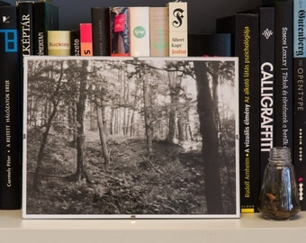 Hungarian Forest – Analog, black and white, darkroom, photography, print