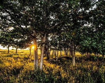 SUNSHINE OAKS SHENANDOAH national park virginia big meadows