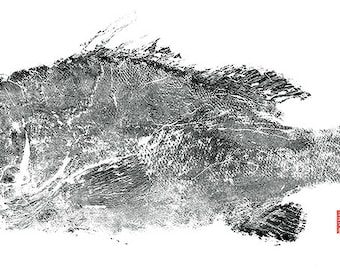 "Limited Edition ""Warsaw Grouper"" large gyotaku print"