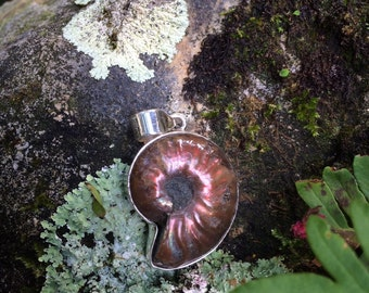 Fossilized ammonite pendant