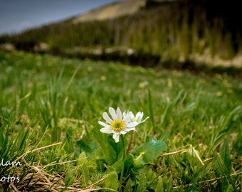 The Lone Flower