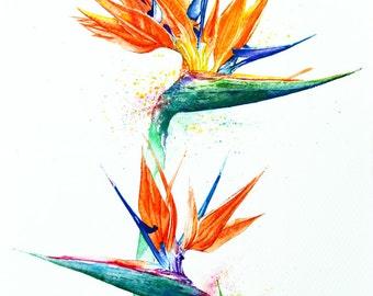 Bird of Paradise, Botanical Art, Watercolor painting, Floral Design, Watercolor print, Home decor, Wall art