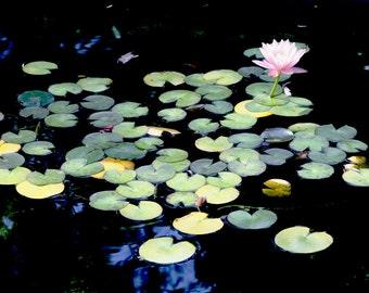 Lilypads Lotus Water Reflections Bright Color Serene Still Japanese Garden Park San Francisco Fine Art Photograph Print Photography