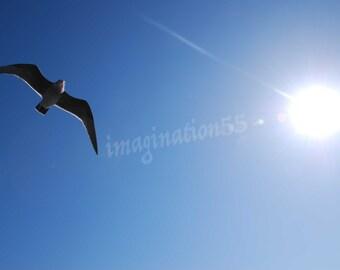 Bird Sun Blue Sky Photography Digital Download