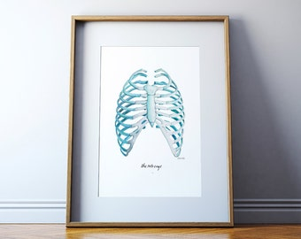 Rib Cage Watercolor Print - Anatomy Watercolor Art Print - Rib Art Print