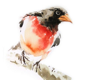 Male Rose Breasted Grosbeak Bird  Painting , Bird print Art print size 8X11 inch for room décor and special gift  No.292